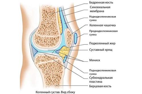 Гипертрофический синовит коленного сустава устройство эндопротезов тазобедренного сустава